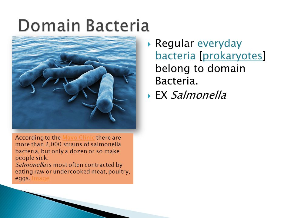 Domain Bacteria Regular everyday bacteria [prokaryotes] belong to domain Bacteria. EX Salmonella.